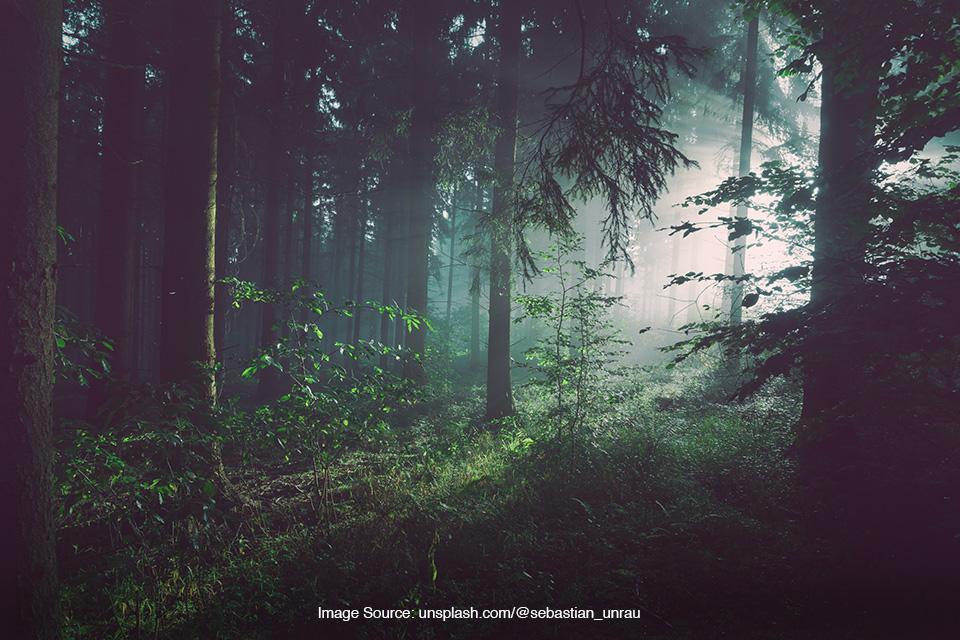 Bertahan hidup di hutan Thailand